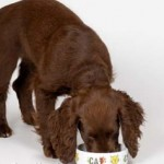 Guide to food that dogs can eat
